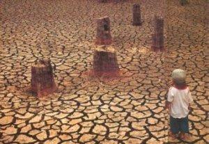 deforestazione2