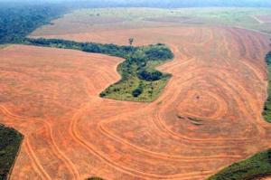 deforestazione_selvaggia_in_america