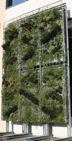 giardini verticali  Greentips - consigli verdi